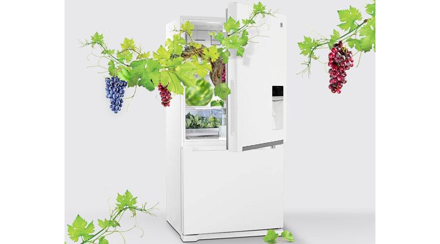 daewoo refrigerator freezer d2bf 0028lw dominokala 6 - یخچال فریزر دوو D4BF-0028